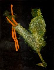 Mutant March, 2012, 84 x 66 cm, olej na kartonu / k prodeji / č. 3