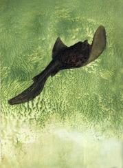 Duše moře, 2009, 18 x 14 cm, olej na kartonu / v soukromé sbírce / č. 54